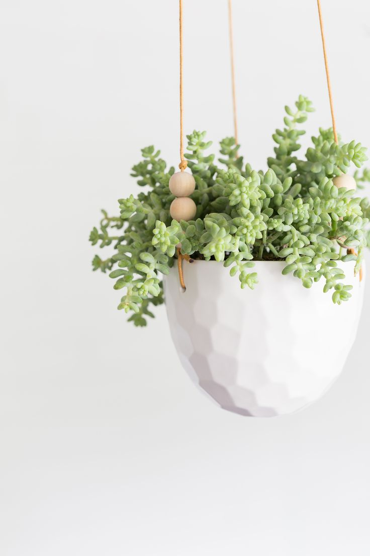 Hanging plants indoors great how to create a wall of for Ways to hang plants inside