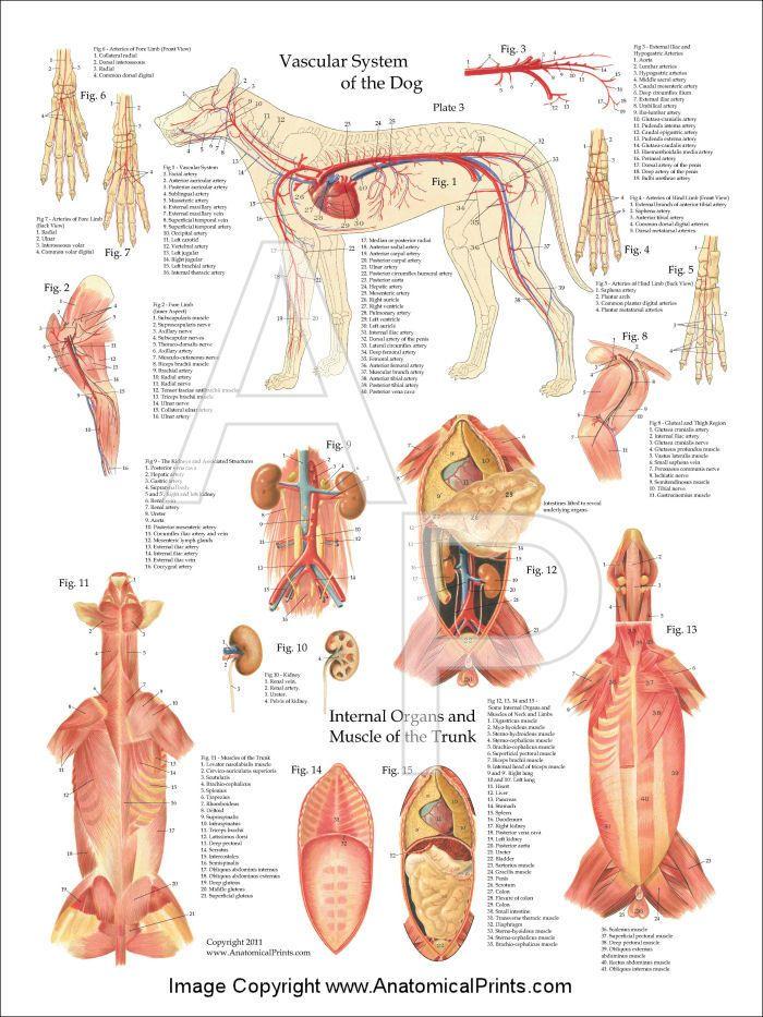 1716 best Vet stuff images on Pinterest | Veterinary medicine ...