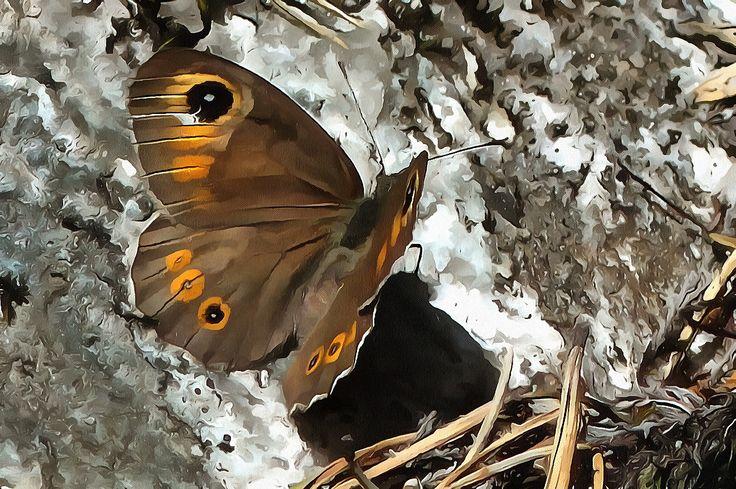 Butterfly Østmarka, Oslo, Norway