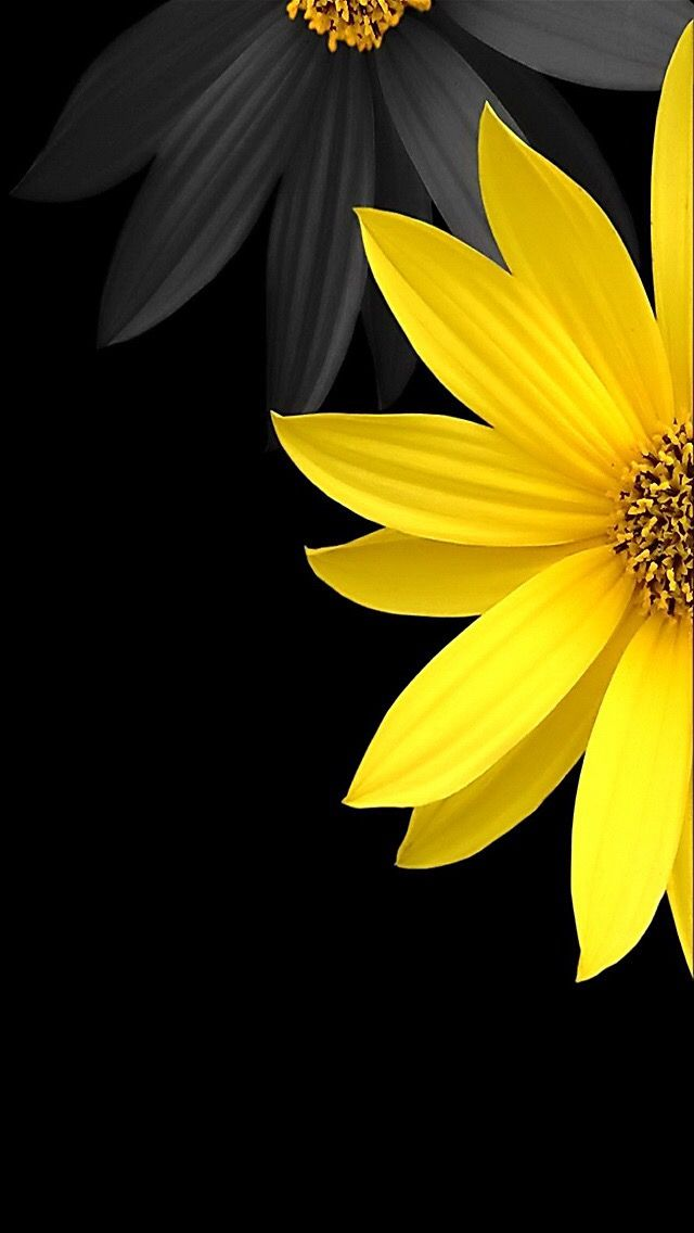 392604 best Colourful Life images on Pinterest | Rainbow ... Yellow Black Flowers Wallpaper