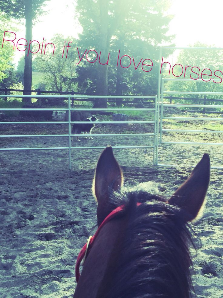 Repin if you love horses