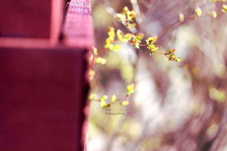 Hiirenkorvat | by Siniirr