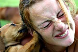 While training your puppy not to nip or bite may sound like a lot of work (and, to be fair, puppy-raising is definitely a lot of work), it i...