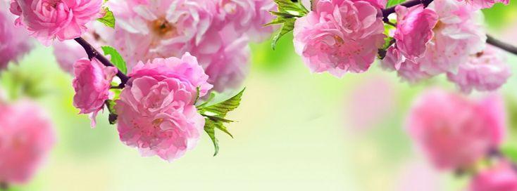 Wild Roses Facebook cover - Facebook timeline covers maker