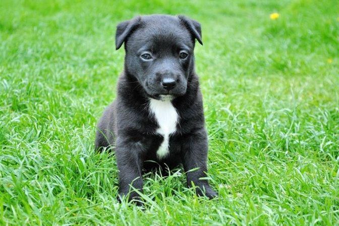 HVALPE: I de første måneder af året skifter mange små hundehvalpe traditionen tro trygheden ud hos hundemor med en helt ny familie. Men man kan gøre meget for at reducere de små hvalpes angst og dermed give den lille hund en bedre start i den nye familie. #hund #hundehvalp #kæledyr