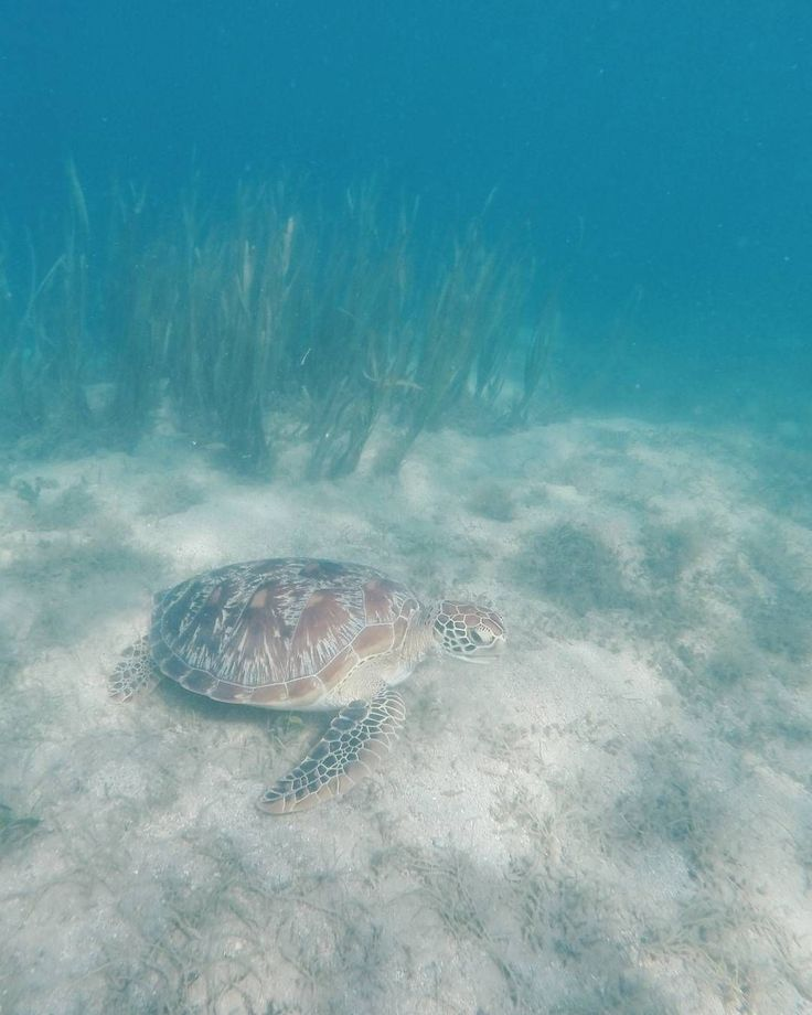 📷 @philocl '🐢 hello friend. #giliasahan #turtlemeon'  #regram #underwater #snorkeling #turtle #instaturtle  #turtlelover #giliislands #exploreindonesia #gopro #getoutstayout #welltraveled #UnderwaterPhotography #seetheworld #goprophotography #wanderlust #globe_travel #travelpicsdaily #simplyadventure #lifeofadventure #letsgosomewhere #wonderful_places #letsgoeverywhere #travelmore #ilovediving #passionpassport #amazing #world #seaturtle