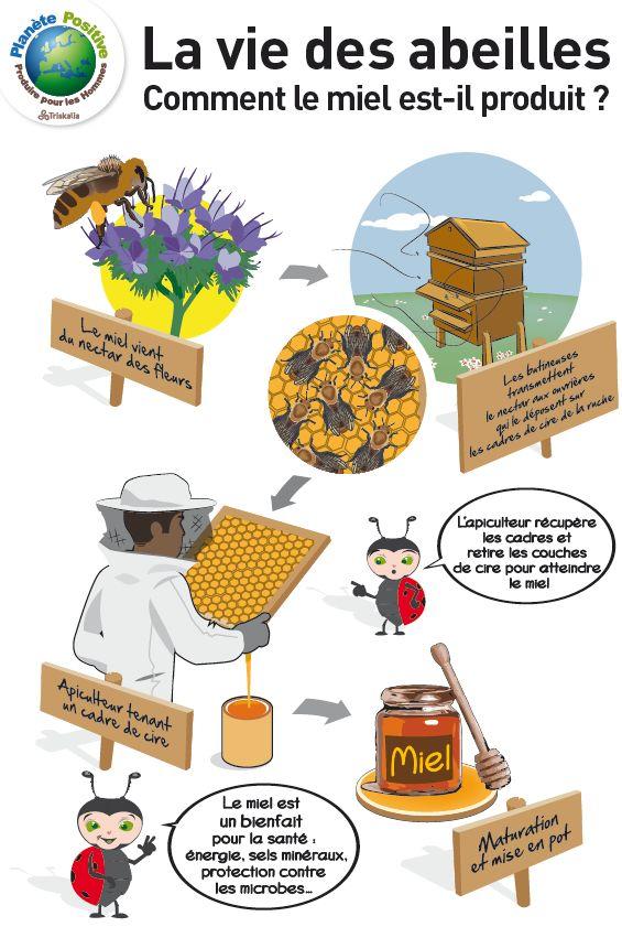 Une ruche, comment ça marche? Des cultures pour les abeilles et des abeilles pour les cultures. Comment fait-on du miel ?
