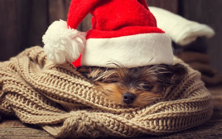 Download wallpapers Christmas, New Year, Maltese lapdog, cute animals, small dog, year of dog, concepts