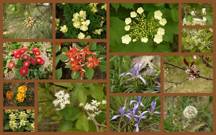 Beauty in Beijing Plant Garden (6)