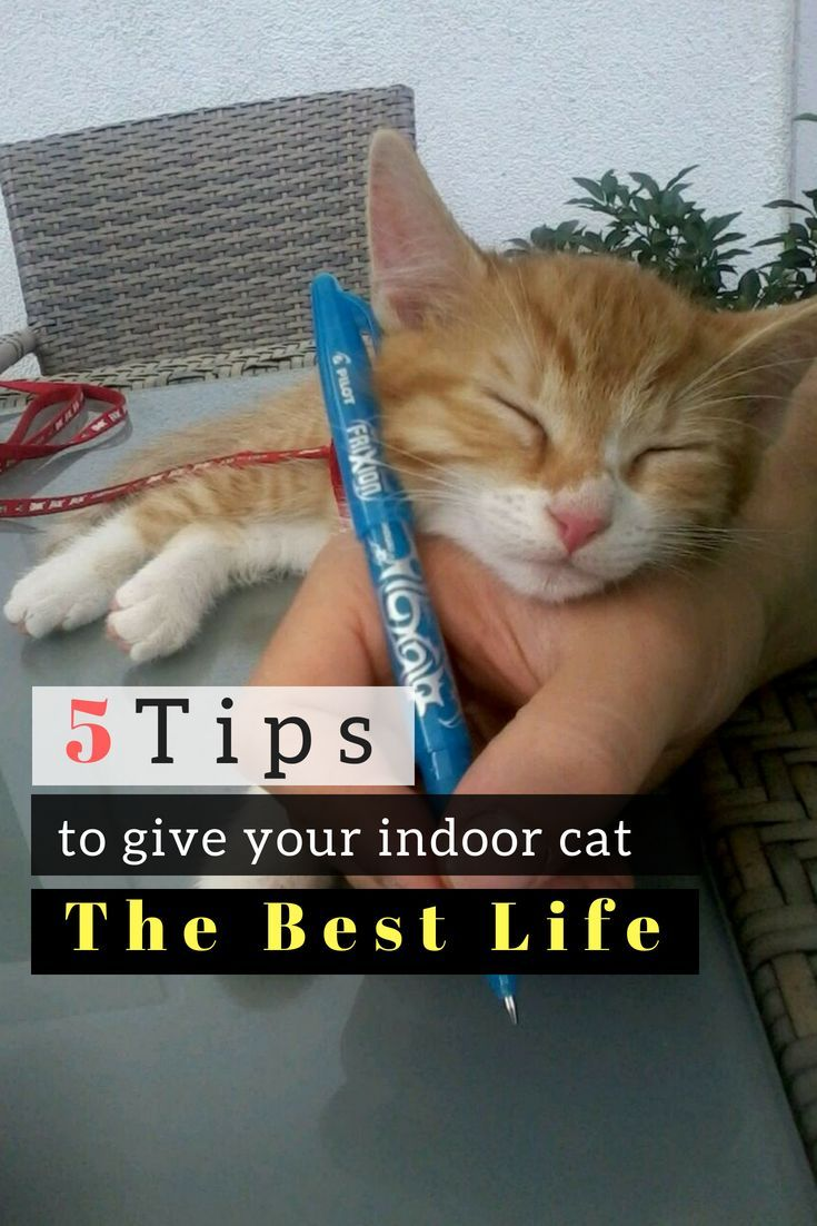 This Is How To Keep Your Indoor Cat Happy Healthy And Entertained Cats Happy Kitten Why Do Cats Purr