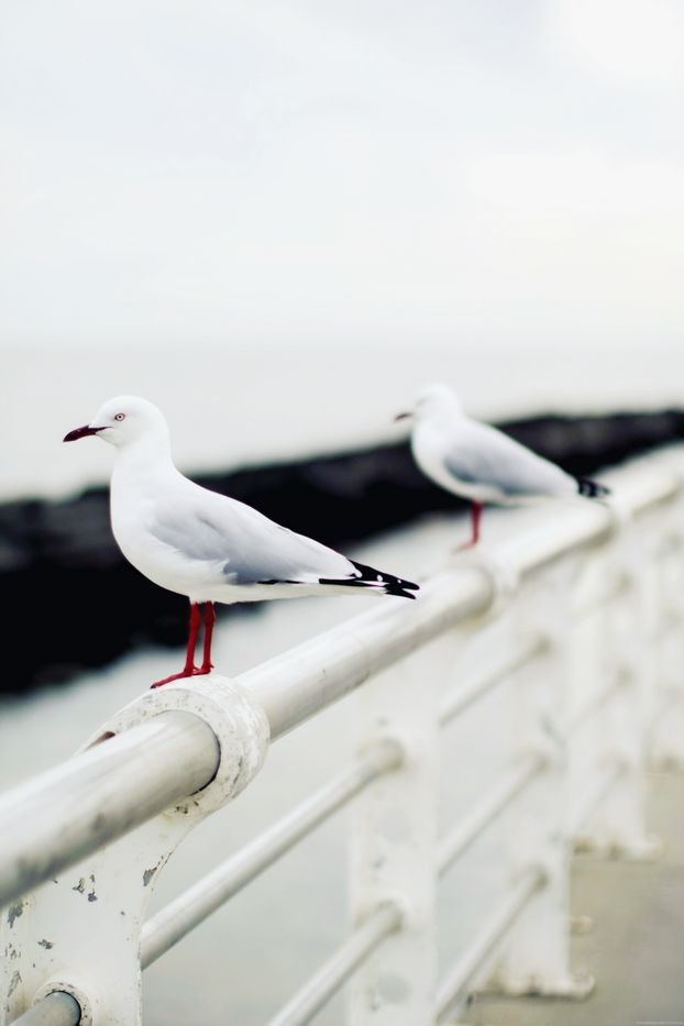 Seagulls - I'm in the minority, I think, but I love the sounds they make!