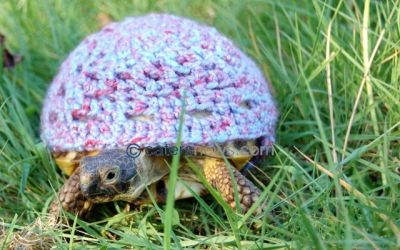 CATERS NEWS AGENCY: TORTOISE JUMPERS