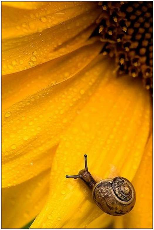 .: Ideas Natural, Sunny Snails, Beautiful, Snails Photography, Natural Photography Ideas, Yellow, Photography Pictures, Flower, Animal