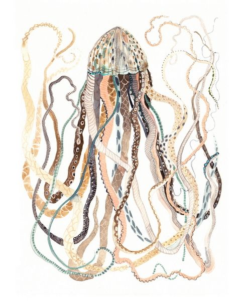 Antique Jellyfish print by Michelle Morin
