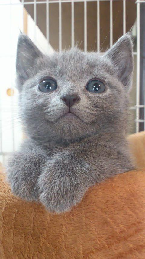 @CatCutePhotos 生後2ヶ月の頃です on Twitpic