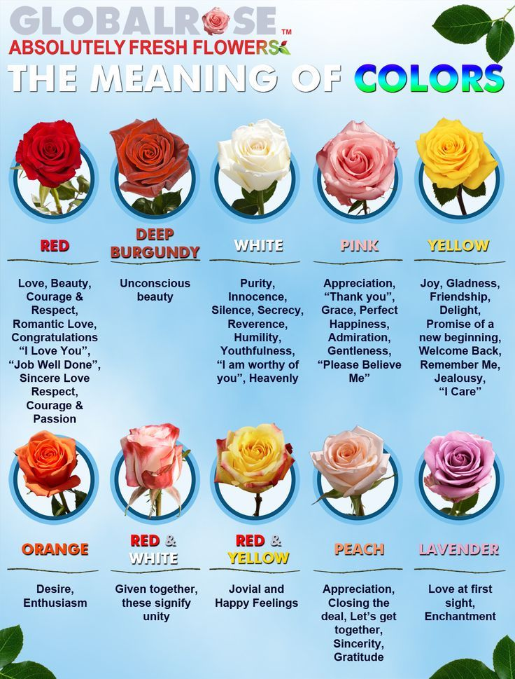 Global Rose Frequently Asked Questions Rose Color Meanings Color Meanings Color Meaning Chart