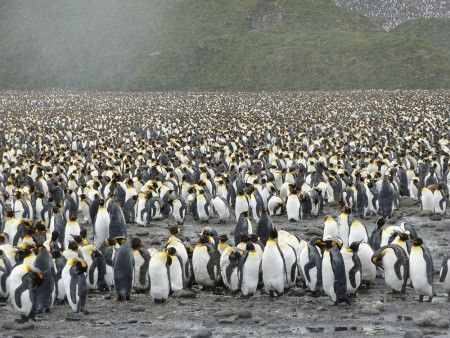 Whilst travelling on the escorted tour, 'Celebrating Shacklton', one of our clients took this incredible picture of a penguin colony in Antarctica.