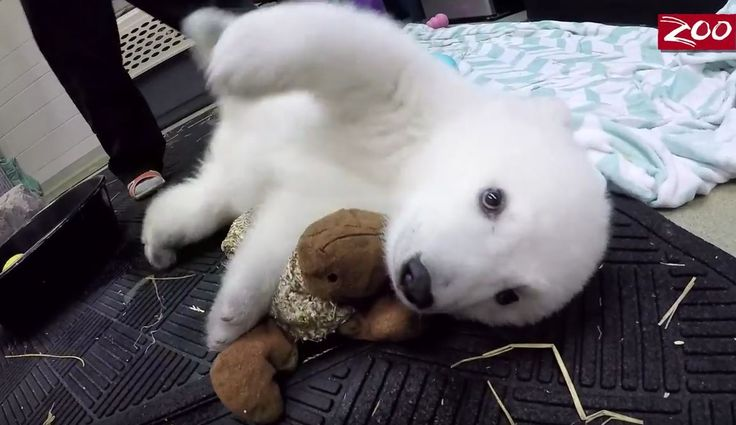 """The Columbus Zoo and Aquarium has announced that """"Nora"""" was the winning name for the new Polar bear cub."""