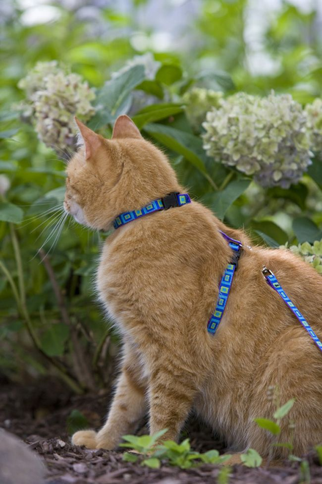 Cat Harness - 16 Pictures (7)