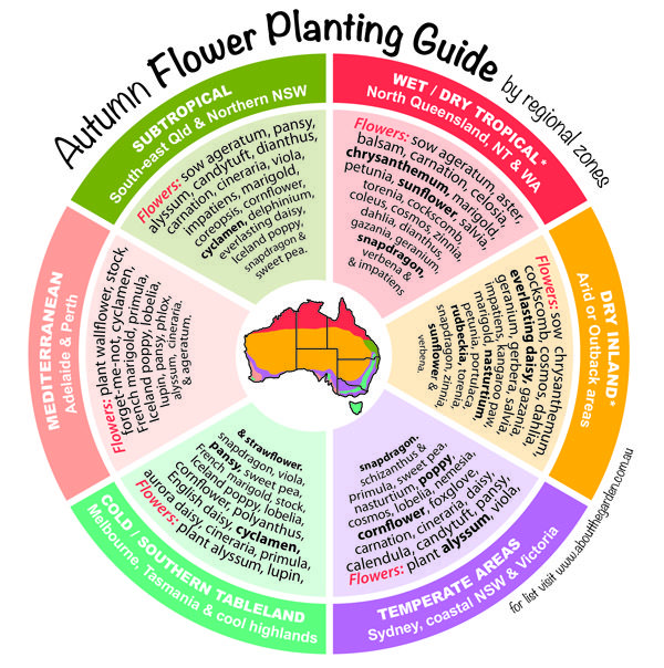 Autumn Flower Planting Guide by temperate zones Australia    #regional #gardening #australia