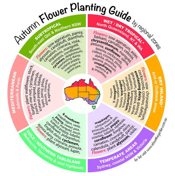 Autumn Flower Planting Guide by temperate zones Australia    #regional #gardening #australia