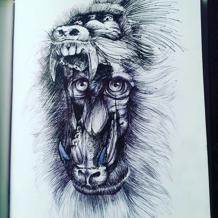Mandrill sketch with microns and white gel pen :) by Magdalena Leszczyniak