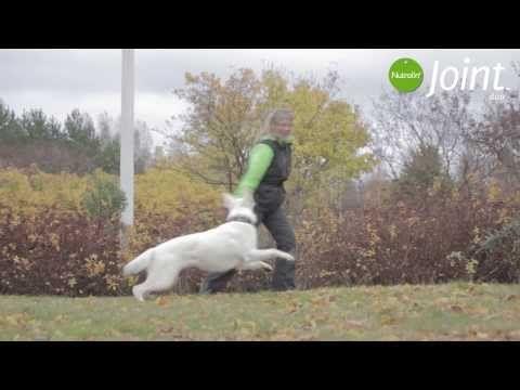 Har din hund problem med lederna? Tusentals hundar med artros har fått hjälp av Nutrolin Joint Duo. Joint Duo är det enda ledtillskottet på marknaden som innehåller både inflammationsdämpande omega-3-fettsyror och de näringsämnen som lederna behöver. Kolla in videon med Nana och Zuli som återfick rörelseglädjen tack vare Nutrolin Joint duo!