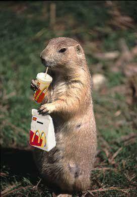 Feeding Squirrels Dog Food