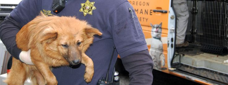 How to report animal cruelty or neglect to Oregon Humane Society investigators. OHS Humane Special Agents are commissioned by the Oregon State Police.