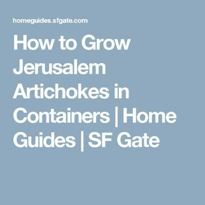 How to Grow Jerusalem Artichokes in Containers | Home Guides | SF Gate