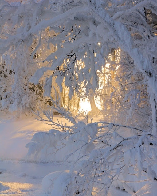 Sunlight filtering through snow covered trees