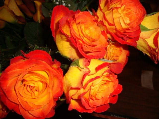 My wedding roses circus rose meaning admiration for The meaning of orange roses