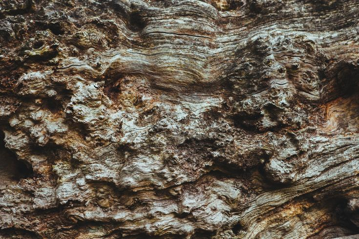 wood-tree-brown-bark.jpg (5616×3744)