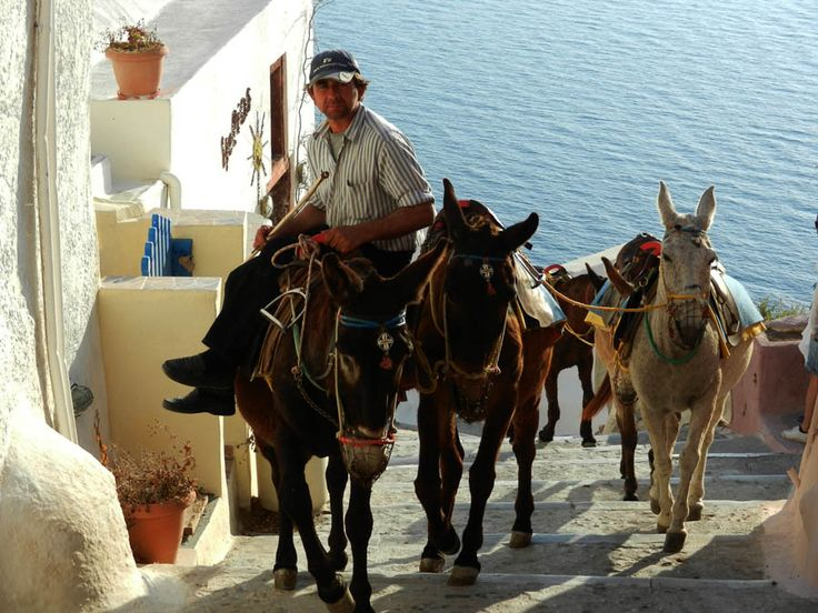 Santorini, Greece - Donkey Transport.  #travel, #destination, #Santorini, #Greece http://travellingwizards.com/destinations/countries/greece/islands/santorini