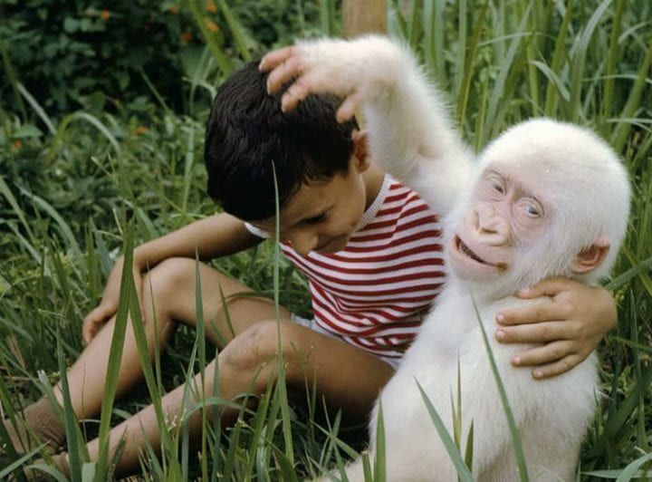 These Animals Look Completely Different Albino Albino Animals Rare Albino Animals Melanistic Animals