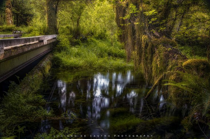 https://flic.kr/p/MUqcCo   Bridges   Photo made on a small stream scene in the charming Hoh Forest in Olympic National Park, Washington State in the United States, Foto feita num pequeno riacho na encantadora Hoh Forest no Olympic National Park, estado de Washington nos Estados Unidos .