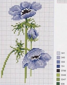 Belles fleurs bleues