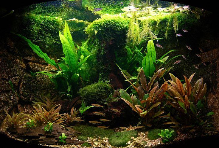 Eines meiner Aquarien: Die Nachbildung eines kleinen malayischen Flüsschens, das ich während einer Südostasienreise erforschte. Alle Tiere und Pflanze...