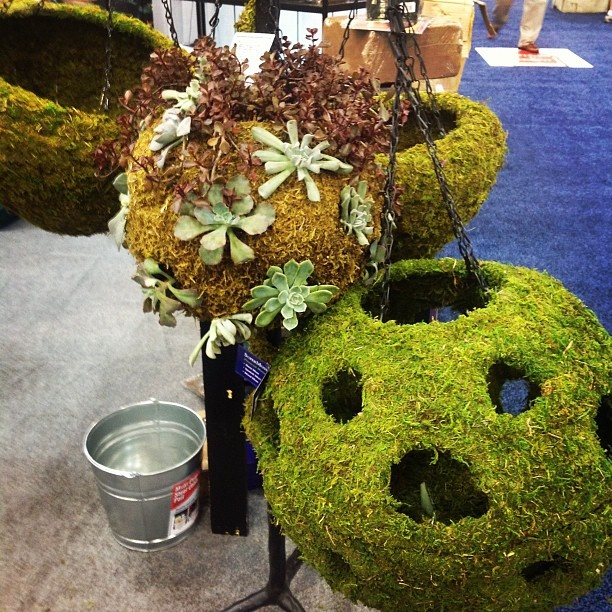 Twitter / Recent images by @PAllenSmith < these hanging moss planters sure are cool ... by @P. Allen Smith #IGC12: Garden Ornaments, Garden Ideas, Garden Tools, Garden Art, Garden Moss, Garden Inspiration, Garden Stuff