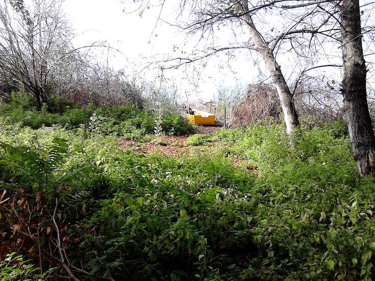 Una barca abbandonata tra la vegetazione