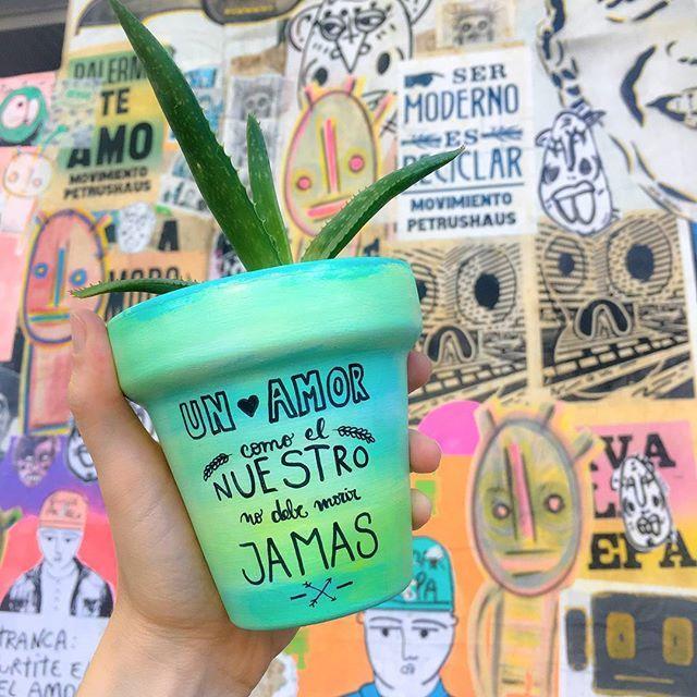 Como los unicornioooos 🎶  Maceta $150 Maceta + suculenta $250  Consultas por inbox - CABA  #Succulove #succulent #succulentsofinstagram #succulentcity #CactusLove #cactus #CactusLover  #cactusofinstagram #cactusclub #cactusobsession #succulentobsession