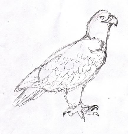 121 best How to Draw Eagles images on Pinterest | Eagle drawing, To ...