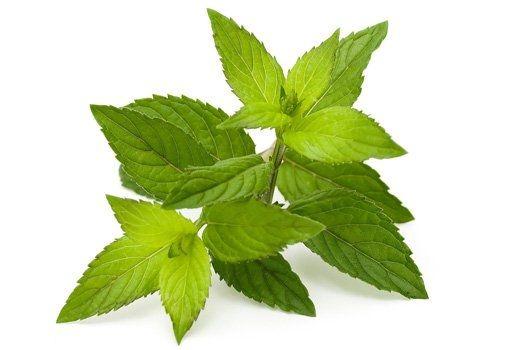 15 способов использовать мяту в быту 1.Снятие спазмов в животе Мята помогает расслабить мышцы пищеварительного тракта и снять спазмы. Поэтому если у вас вдруг на нервной почве скрутило живот, выпейте горячего чая с мятой или просто теплой воды с мятой и лимоном. 2.Предотвращение инфекционных заболеваний Мята обладает достаточно сильными антибактериальными свойствами. Регулярное включение её в ваш рацион поможет вашем организму легче перенести или вовсе отразить инфекционные и грибковые…