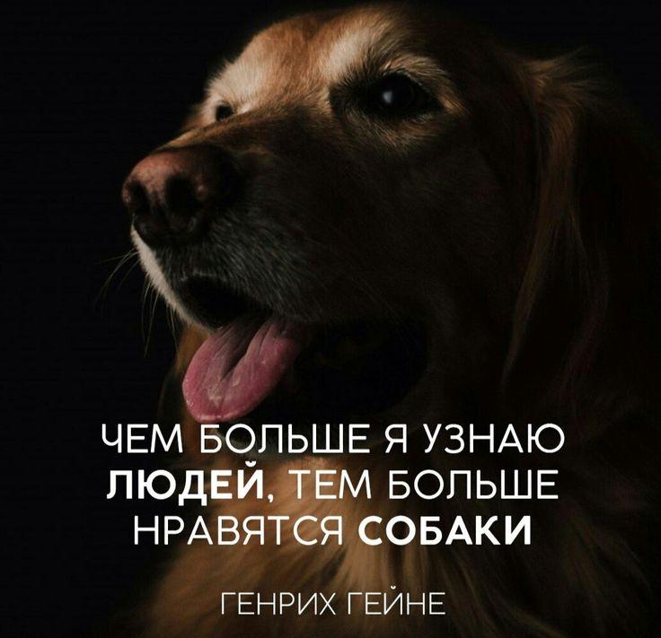 салоны картинки цитаты про собак печь