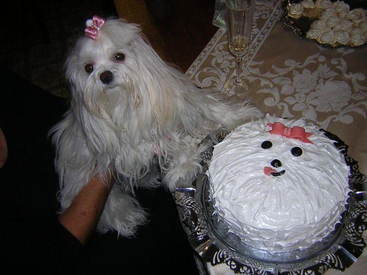 Dog Birthday Cake Decorating Ideas : 482 best Bichon cake decorating images on Pinterest Dog ...