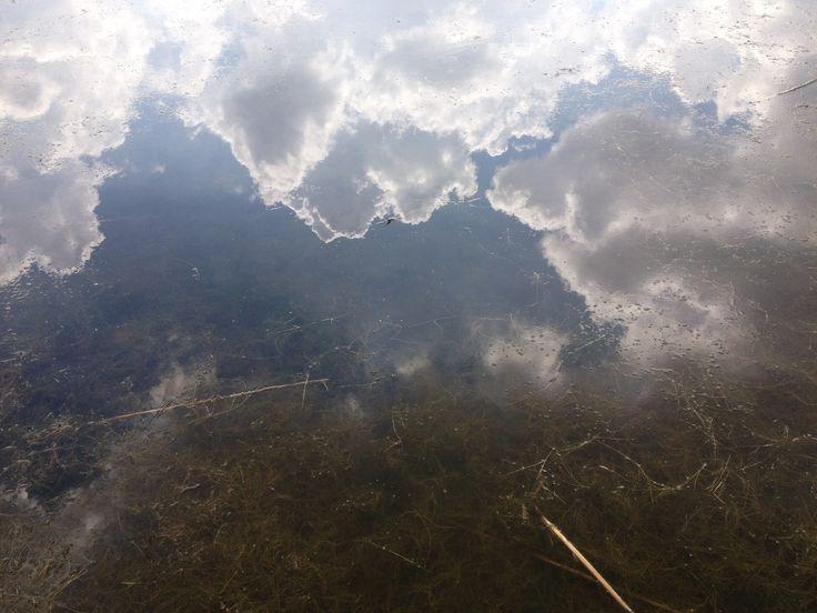 Pergusa (EN) - Sulla superficie perfettamente riflettente del Lago di Pergusa le nuvole si fondono con specie vegetali particolari, adatte all'acqua salmastra del lago - On perfectly reflective surface of Lake Pergusa clouds blend with plant species adapted to brackish water.