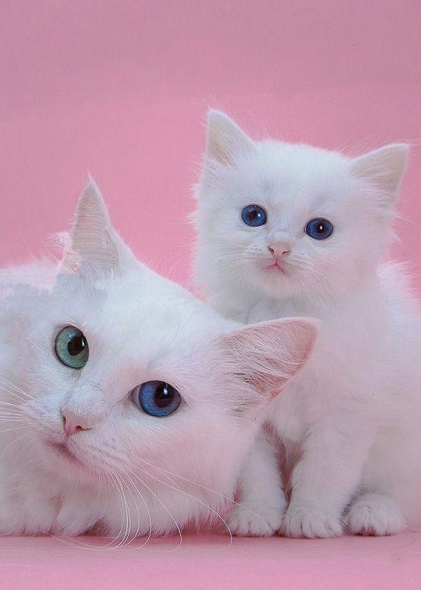 Colour My World Pretty Cats Cute Animals Beautiful Cats
