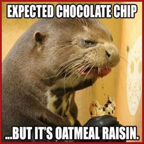 Expected Chocolate Chip But Its Oatmeal Raisin funny lol humor funny pictures funny memes funny pics funny images really funny pictures funny pictures and images
