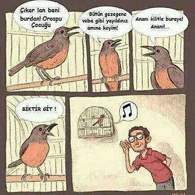 #karikatür #caps #mizah #istanbul #izmir #ankara #eskisehir #karikatur #turkey #turkiye #follow #takip #karikaturcaps #komik #iyigeceler #igers #instalike #instag #tagforlikes #penguen #uykusuz #ozeraydogan #lemankultur #leman #eglence #girgir #sami #komedi #komik #kahkaha #gunaydin