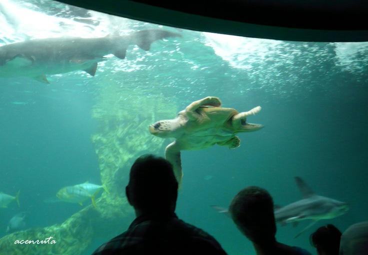 Zoo Aquarium. Tanque de los tiburones, tortugas y rayas.